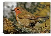 The bird Robin Red Breast, Canvas Print