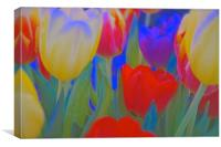 Inside a bunch of Tulips                          , Canvas Print