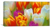 Bunch of soft tone Tulip Flowers                  , Canvas Print