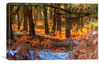 Winter's day on Cannock chase, Canvas Print