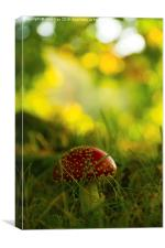 Toadstool on the Chase, Canvas Print