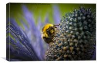 Macro of a bee, Canvas Print