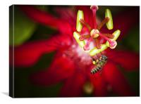 Macro photograph of a bee collecting pollen., Canvas Print