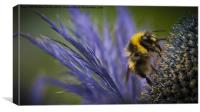 Bee on a Scottish Thistle, Canvas Print