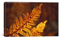Fern Fronds in Fall, Canvas Print