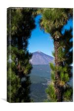 View of Mount Teide through arch of pine trees, T, Canvas Print