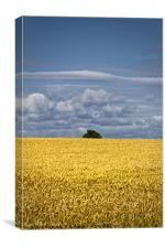 Ready for harvest, Canvas Print