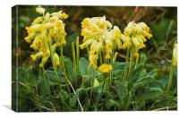 Cowslips with a liquid lines texture, Canvas Print