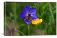 Cranesbill, buttercup and wasp, Canvas Print