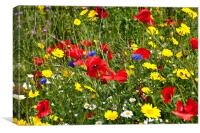 Colourful Wild Flowers, Canvas Print