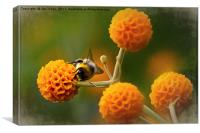 Busy bee on buddleia, Canvas Print