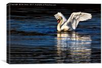 Stretching Swan, Canvas Print
