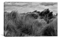 Sand Dunes in Black and White, Canvas Print