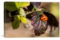 Ladybird welcoming in Spring., Canvas Print