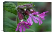 English Wild Flowers - Red Campion, Canvas Print