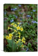 English Wild Flowers - Forget me not and Cowslip, Canvas Print