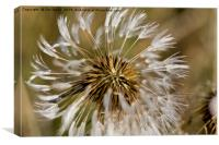 Dandelion seeds and their parachutes (4), Canvas Print