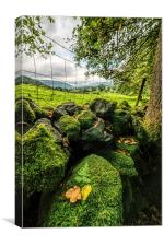 Mossy Wall, Canvas Print