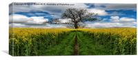 Field Of Rapeseeds, Canvas Print