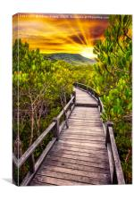 Mangrove Forest Sunset, Canvas Print