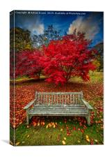Autumn Splendour, Canvas Print