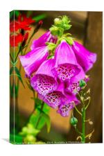 Foxgloves, Canvas Print