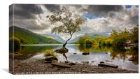 Padarn lake Tree , Canvas Print
