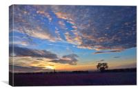 Sunset over a field of flowers, Canvas Print