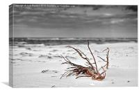 Washed up on the beach, Canvas Print