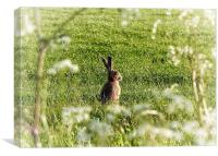 Hare on a sunny Spring day, Canvas Print