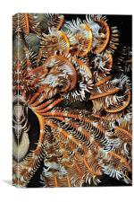 Furly feather, Canvas Print