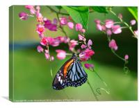 Beautiful Tiger Butterfly, Canvas Print