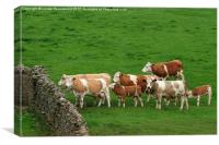 Waiting Cattle, Canvas Print