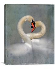 Courting Swans in Spring, Canvas Print