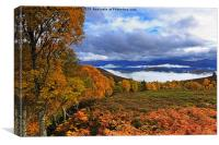 Misty day in the Cairngorms in Autumn, Canvas Print