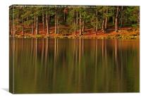 Pine forest and still waters of the loch at dawn, Canvas Print