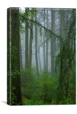 Misty woodland near May Beck and Falling Foss, Canvas Print