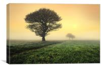 trees in the morning sunrise, Canvas Print