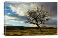 Hawthorn Isolation, Canvas Print