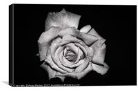 Rose in Monochrome, Canvas Print