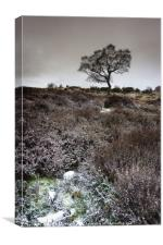 Winter Heather and Hawthorn, Canvas Print