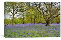 Bluebell Wood Essex, Canvas Print