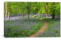 Woodland Bluebells, Canvas Print