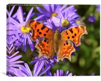 Comma Butterfly, Canvas Print
