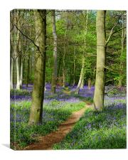 Bluebell path , Canvas Print