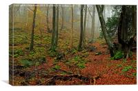 Misty Forest of Dean, Canvas Print