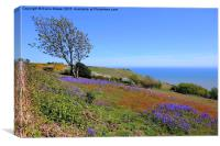 Hastings Country Park, Canvas Print