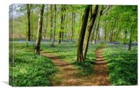 Paths through the Bluebells, Canvas Print