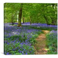 Native English Bluebells, Canvas Print