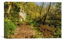 Woodland Path to Janets Foss, Canvas Print
